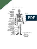 Sistem Muskuluskeletal