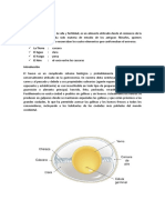 Estructura de Huevo