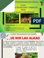 PLANTAS Y HONGOS