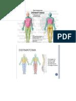 Los Dermatomas