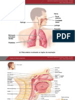 C18 Sistema Respiratorio