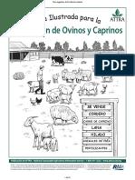 Manual de Cria Ovinos