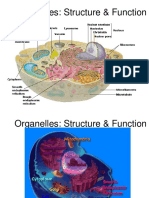 Structure and Function of Cell's Organelles