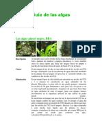 Guía de Las Algas
