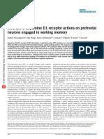 Inverted-U Dopamine D1 Receptor Actions on Prefrontal Neurons Engaged in Working Memory - Vijayraghavan - 2007