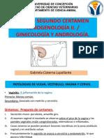 Cert 2 Teriogenología
