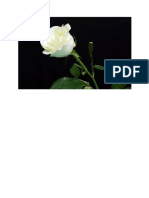 mawar berduri
