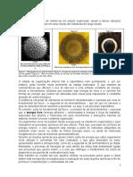 Fotossíntese e Respiração Celular