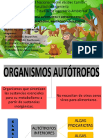 Organismos Autotrofos y Heterotrofos
