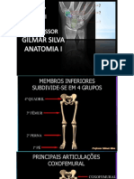 Anatomia Aula Mmii