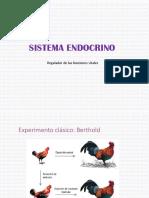 sistema endocrinico