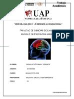 Ta Neurpsicología CAMILA UNDA