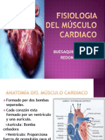 fisiologiadelmsculocardiaco-131116152259-phpapp01