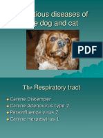 cm_3-dog_and_cat.ppt