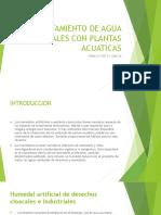 Tratamiento de Agua Residuales Con Plantas Acuaticas