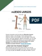 Las partes de los huesos humanosCuáles son los nombres de los huesos de.docx