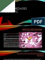 enfermedadesbovinas-140405183740-phpapp02