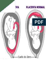 ANATOMÍA Del Intestino g y d