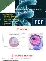 Control de funciones celulares y reproducción