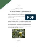 Taksonomi Daun Jambu Biji