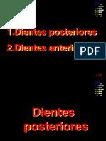 Oclusion 2da Fase