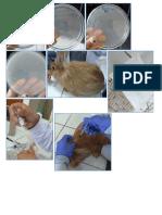Práctica 5 y 6 de Virología Bm-543