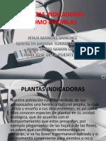 PLANTAS INDICADORA