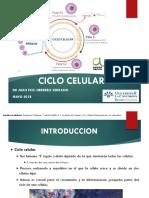 2.1 Ciclo Celular