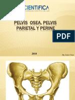 Pelvis Osea, Parietal y Perineo