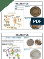 HELMINTOS y protozoarios