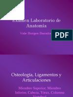 Examen_Laboratorio_de_Anatomía_2-1.pdf