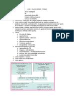 Lesión y muerte celular 32 diapos FONDO NARANJA.docx