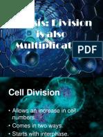 4_Mitosis-1