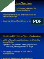 Pathophysiology Adapt and Injury
