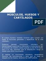 Musculos, Huesos y Cartílagos