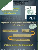 8. Digestión y Absorción de Nutrientes
