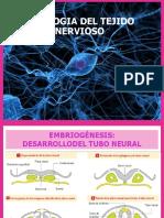 Anatomia y Fisiologia Del Sistema Nervioso 100%Realnofake Nivel Sayayin