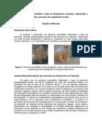 PICT-2013-2553 Estudio de Mercado.pdf