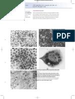 Human_Virology Collier Oxford281-326.en.es