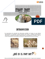 Seminario Foot Rot