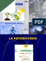 Manual de Botánica