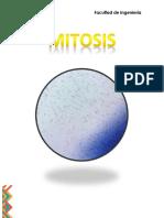 Mitosis INFORME LABORATORIO