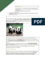 El Oso Panda y Sus Características