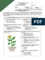 352646033 Evaluacion de Sintesis Ciencias Naturales 3 Basico 2