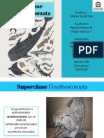 Subclase Gnathostomata