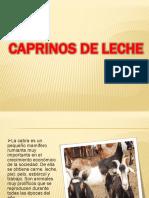 CAPRINOS.pptx