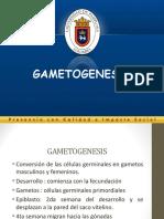 3-Gametogenesis