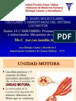 Sarcómero Proteínas Mecanismo Contracción