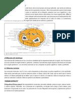 TEMA 13 Region Musculo Aponeurotica de Antebrazo