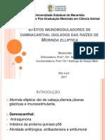 Efeitos Imunomoduladores de Damnacanthal Isolados Das Raízes De